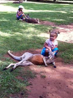 Kangas at Aust Zoo